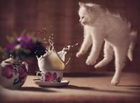 Лучшие кафе с кошками в Европе